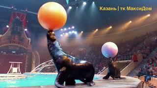 Цирковое шоу воды, огня и света