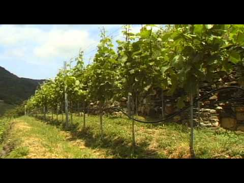 Blue Danube Cruise Wachau Vacation Travel Video Guide