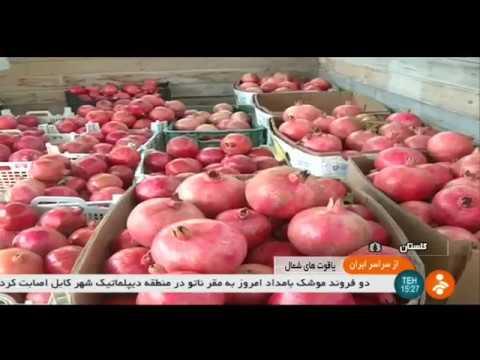 Iran Organic Pomegranate harvest, Golestan province برداشت انار استان گلستان ايران