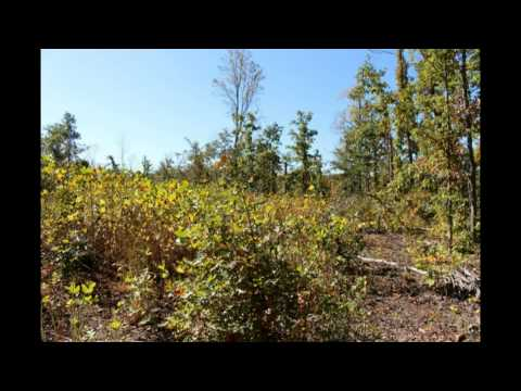 Buy Raw Land Louisa County, Invest in Affordable Land