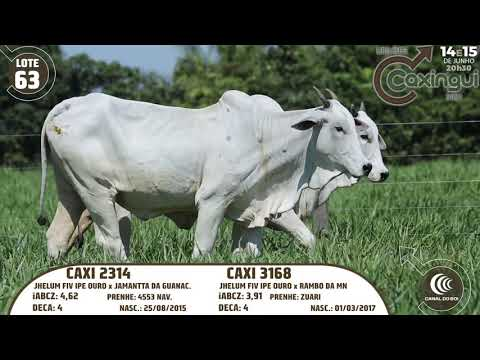 LOTE 63   CAXI 3168, CAXI 2314