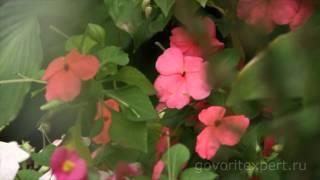 видео Идеальный сад своими руками | Итальянский стиль в ландшафтном дизайне