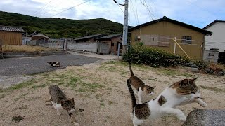 If you sit on cat island, you will be surrounded by stray cats in no time.