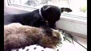 Dog & Prairie dog