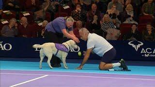 شاهد: الكلاب الوفية تحسن جمع كرات التنس أيضا!