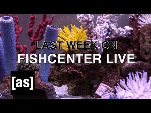 FishCenter Recap 1/9/17 | FishCenter | Adult Swim