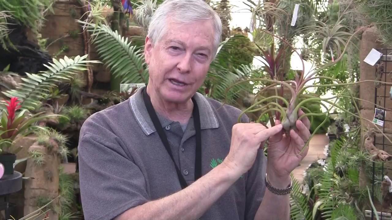Paul Isley Rainforest Flora Inc Tilly Talks Tillandsia