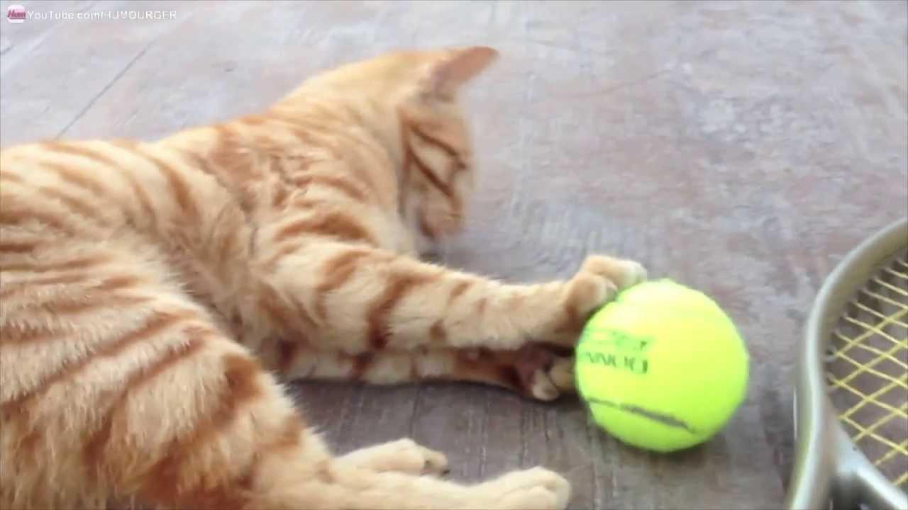 chat dr le qui joue griffer et mordre une balle de tennis youtube. Black Bedroom Furniture Sets. Home Design Ideas