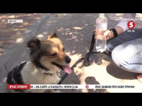 'Воду – тваринам!':