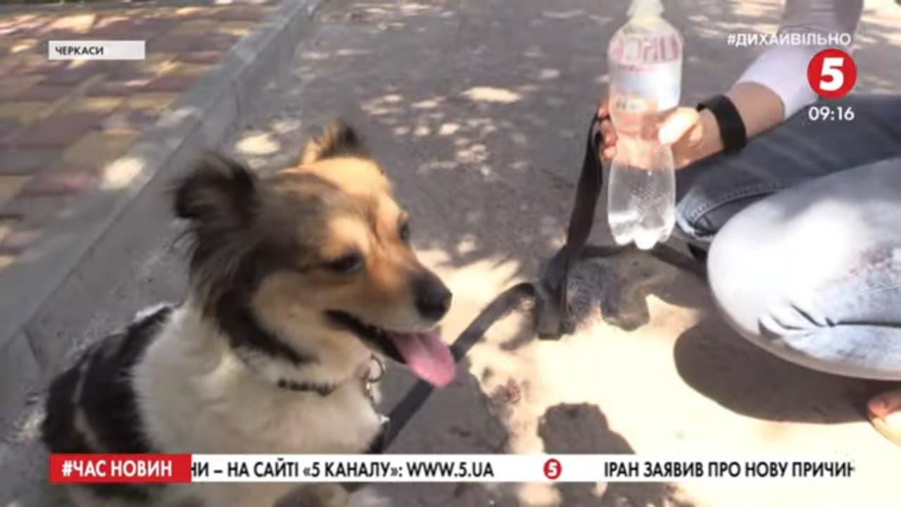 """""""Воду – тваринам!"""": як мешканці Черкас рятують безпритульних тварин від спеки"""