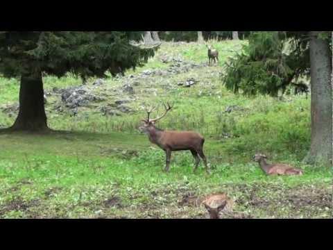 Hohe Wand Nature Park - Austria