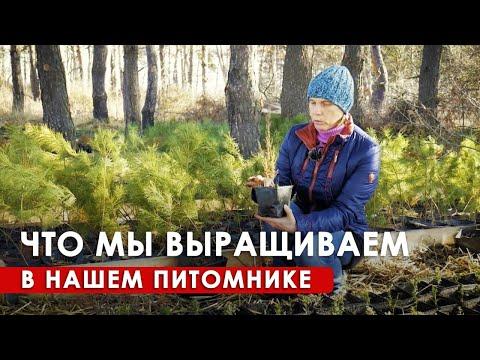 Питомник саженцев в Радосвете. Ассортимент и устройство // 6+