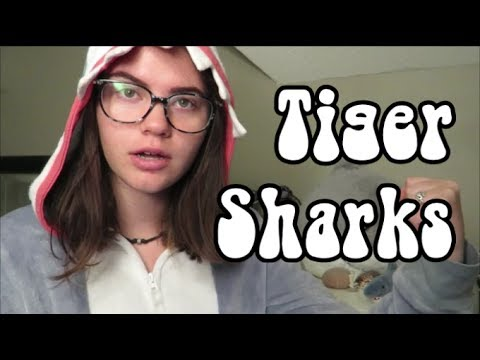 Tiger Shark Facts | Shark Week