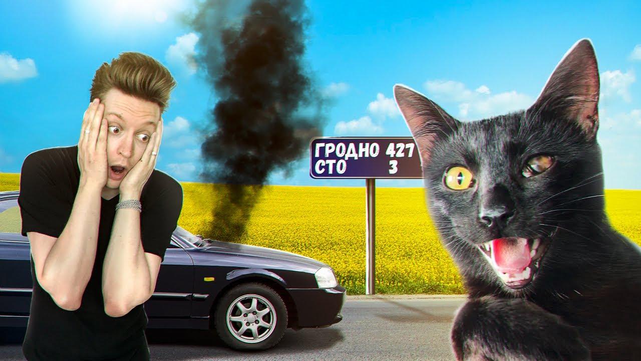 Как мы везли котенка без глазика в другой конец страны / SANI vlog