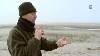 Siffleurs en Baie de Somme 4ème épisode : Siffler à tue-tête dans son cercueil !