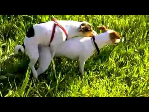 Zoofilia con perros  Zoofilia gratis  VIDEOS PORNO XXX