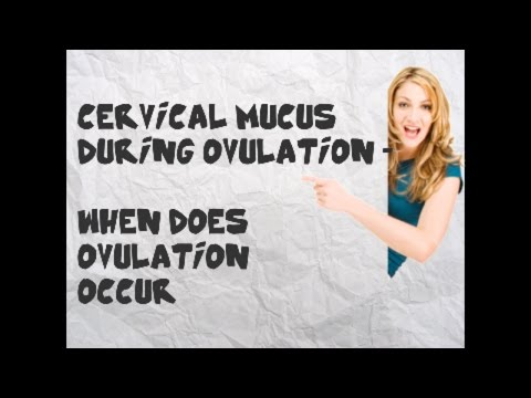 Fertile Cervical Mucus During Ovulation    When does ovulation occur   Cervical Mucus Stages