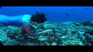 Club des Belugas - La Mer