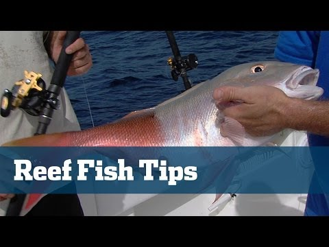 Bahamas Reef Fishing & Deep Dropping - Florida Sport Fishing TV