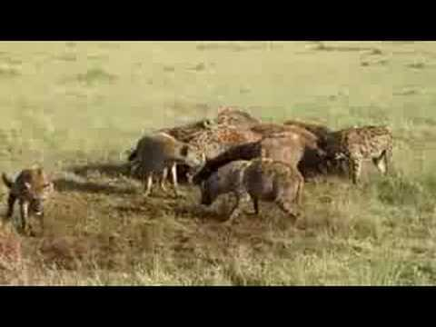 Lunchtime on the Mara...
