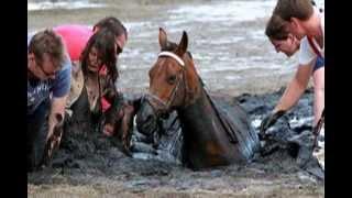 Rescate de un caballo del fango en Australia. Propietaria Nicole Graham.