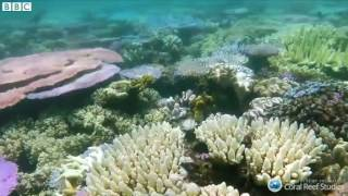 Great Barrier Reef  35% of corals 'dead or dying'   BBC News