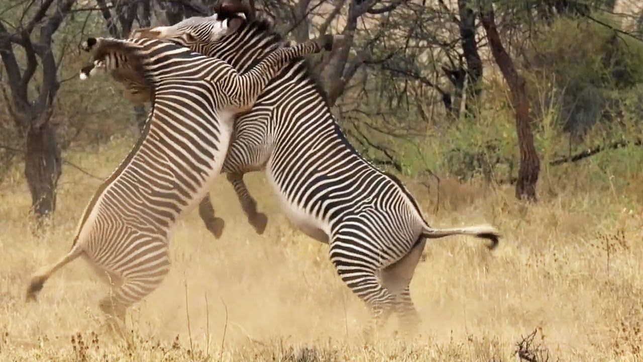 Best of African Animals | Top 5 | BBC Earth - YouTube