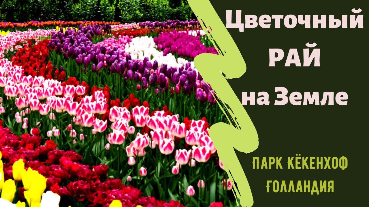 💐 Цветочный Рай на Земле 🌷 Кекенхоф - Сказочный Парк ЦВЕТОВ