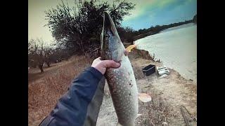 Рыбалка на щуку осенью 2020 Активный клев щуки Рыбалка в Астрахани