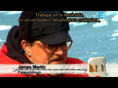 Fósiles en la Antártida: La Prueba del Clima Cálido que Impero Antiguamente.