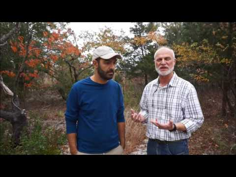 Examining Tree Rings for Climate Change Trends