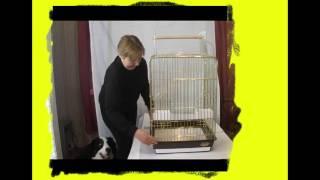 triol1038. Клетка для попугая