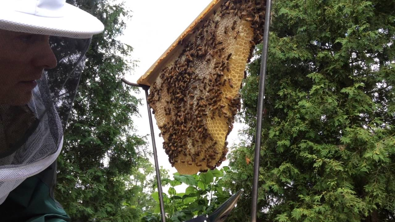 Simple Top Bar Hive Comb Contents Inspection Form - YouTube