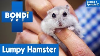 🐹 Cute Hamster Has A Problem | FULL EPISODE | S07E05 | Bondi Vet