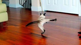 Смешные приколы! Коты летают!