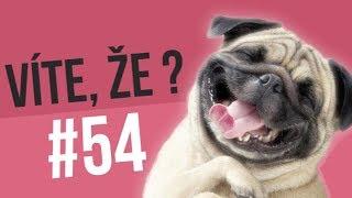 #54 ● VÍTE, ŽE...?