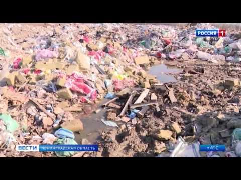 В Колтушах начали утилизировать свалку опасных отходов