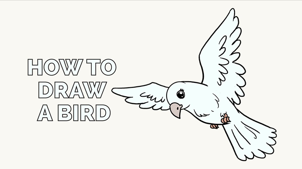 how to draw a bird in a few easy steps  drawing tutorial