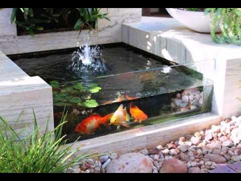 Pesci Da Laghetto Giardino.Fantastiche Idee Su Piccolo Pesce Koi Per Laghetti Da Giardino Youtube