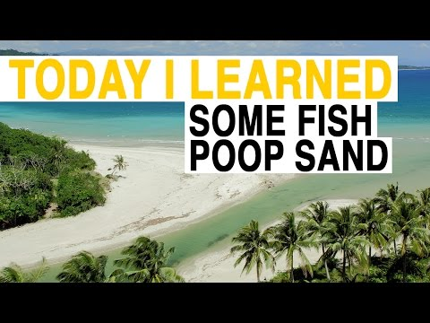 TIL: These White Sand Beaches Aren't What You Think | Today I Learned