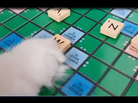 Cats playing Scrabble, they've got a message for you