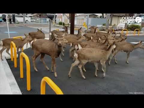 L'impact du coronavirus sur les animaux sauvages