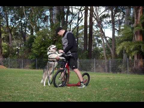 KOSTKA Hill Dog scooter and Husky Carlos mushing in Sydney, Australia