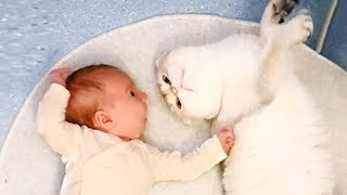 NEW 2019 Funny Baby and Cat Playing Together - Baby and Pet Videos