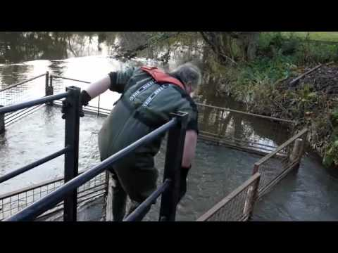 Salmon Trapping
