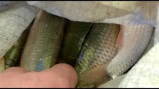 Капчагай рыбалка зимняя нашли море воблы супер улов часть 1 дата 01 02 2021