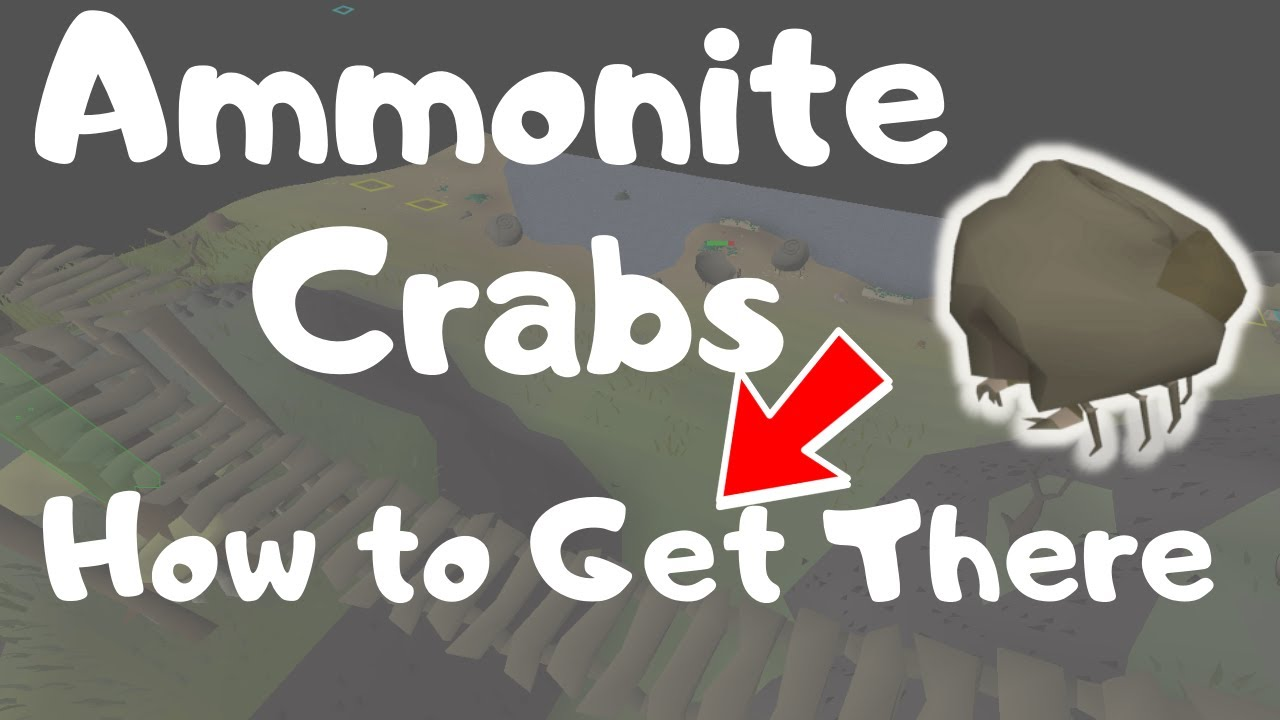 How to Get to Ammonite Crabs in OSRS ...