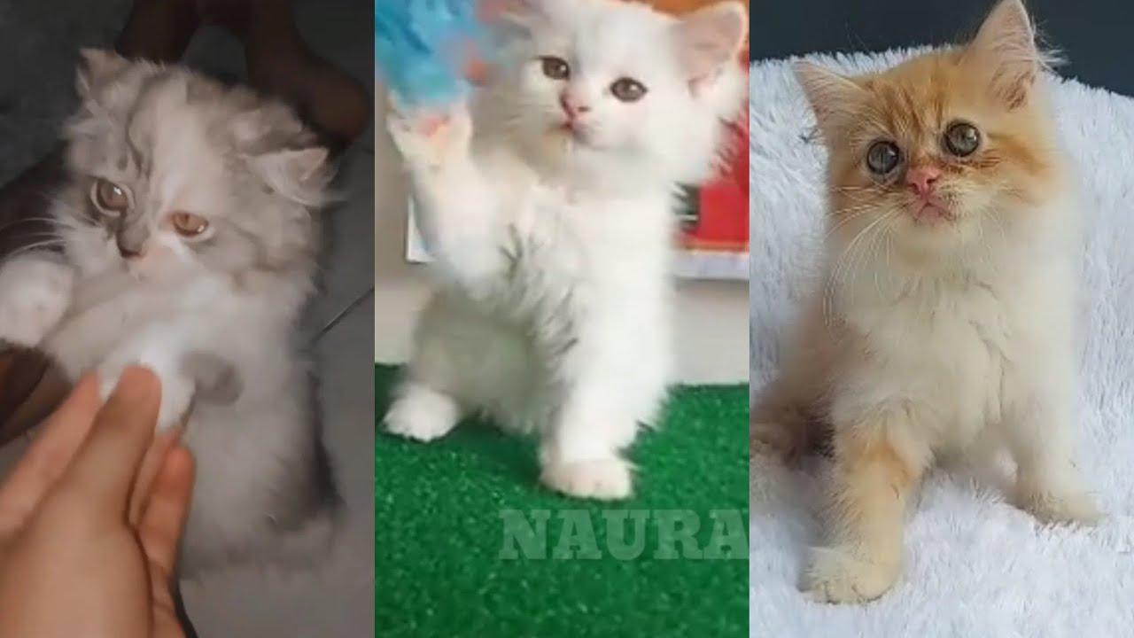 Cute Kittens Beraneka Warna Bermain | anak kucing lucu