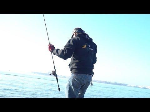 Topwater Fishing In San Diego Bay