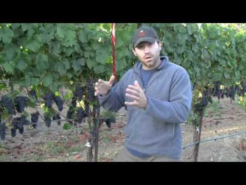 Mononi Pinot noir Harvest 2009